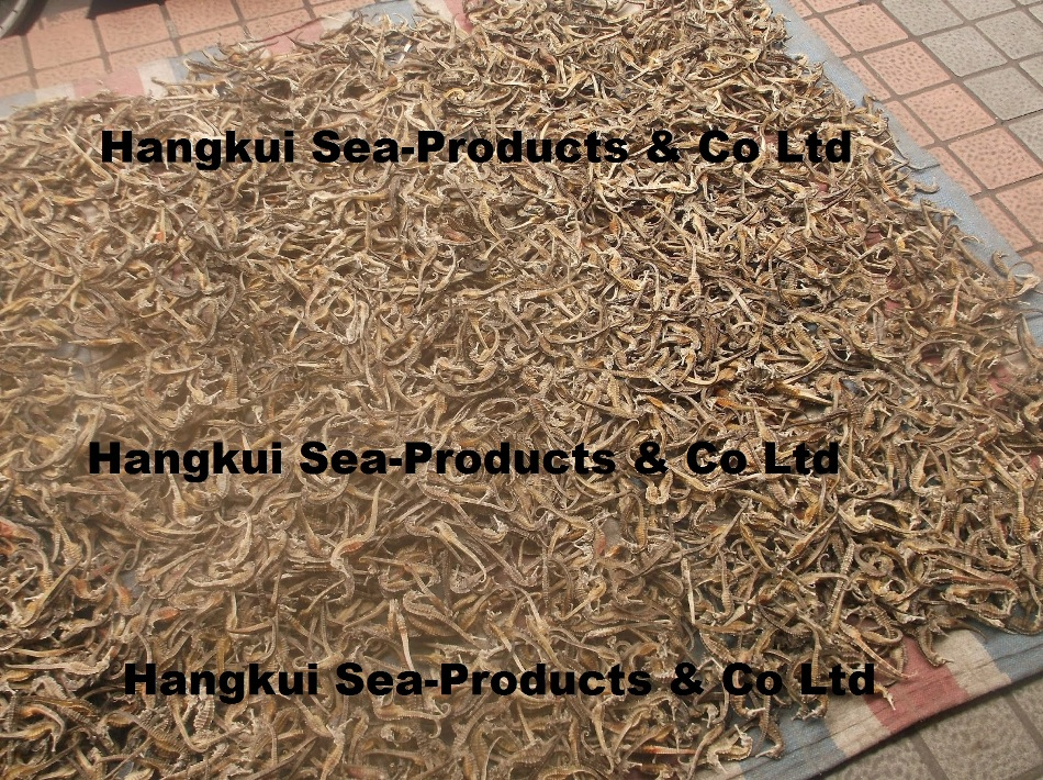 Wholesale Seafood Trading Board - SELL: Dried Seahorse