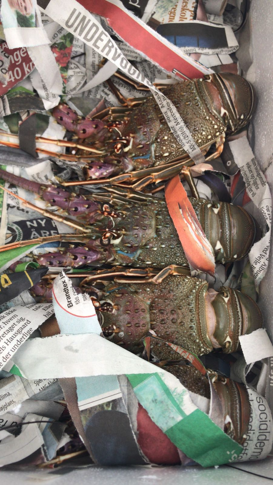 Wholesale Seafood Trading Board - Exporters of live lobsters