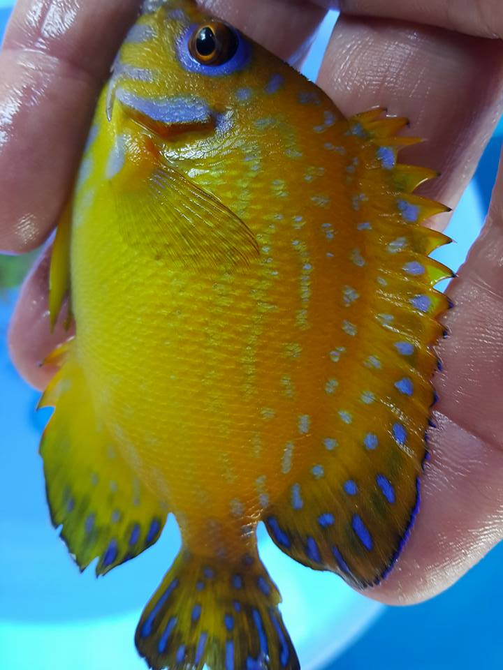 Wholesale Tropical Fish Trading Board - Marine Fish Export