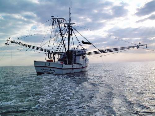 Shrimping Off Florida - Credit NOAA/FKNMS