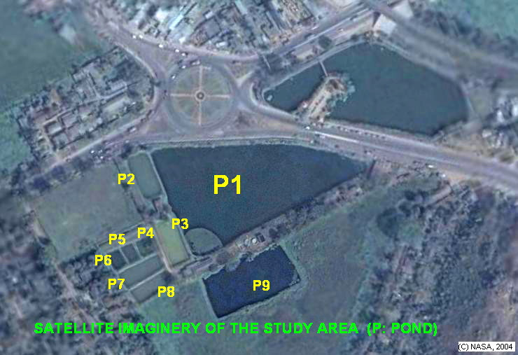 Satellite Imagery of the study area