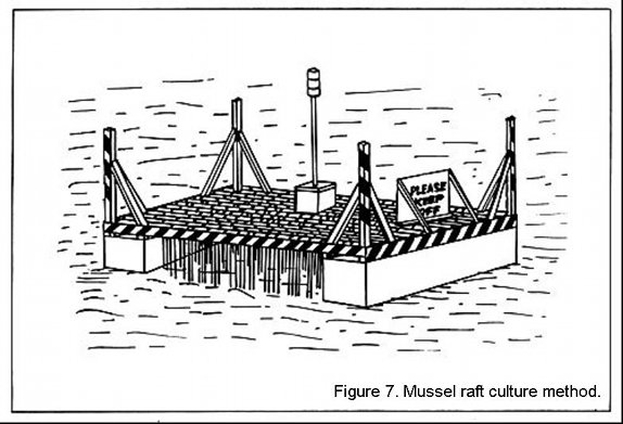 Mussel raft culture method